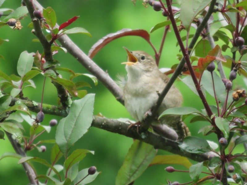 Compassion thoughts as a bird sitting on branch and singing